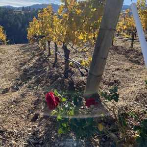 Organic Wineries of California to Know